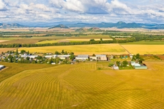 Willamette Valley Stock Image Farms